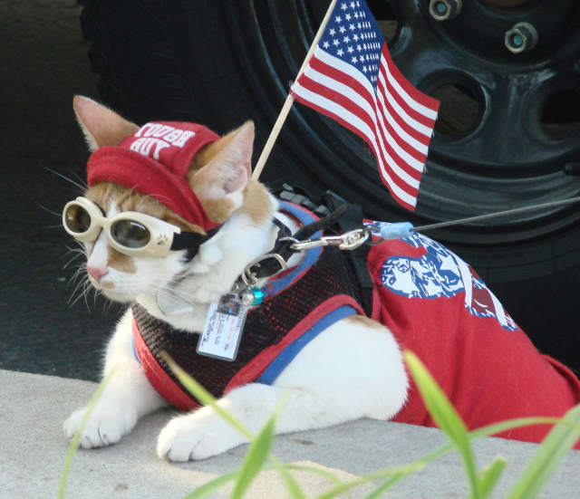 Cool Cat Patriot Thor goggles tough guy cute kitten