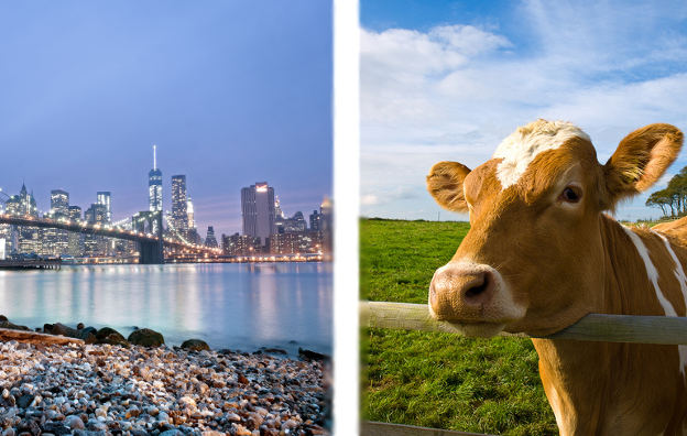 Urban City NYC vs. Rural Town Cow College Locations