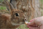 Person Feeding a Rabbit