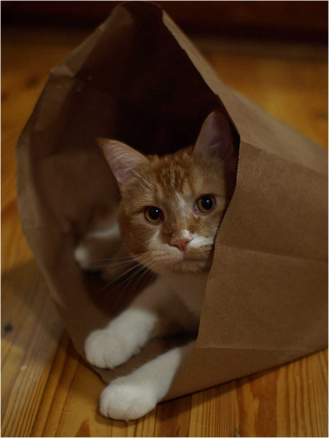Don't Let the Cat Out of the Bag English Idioms
